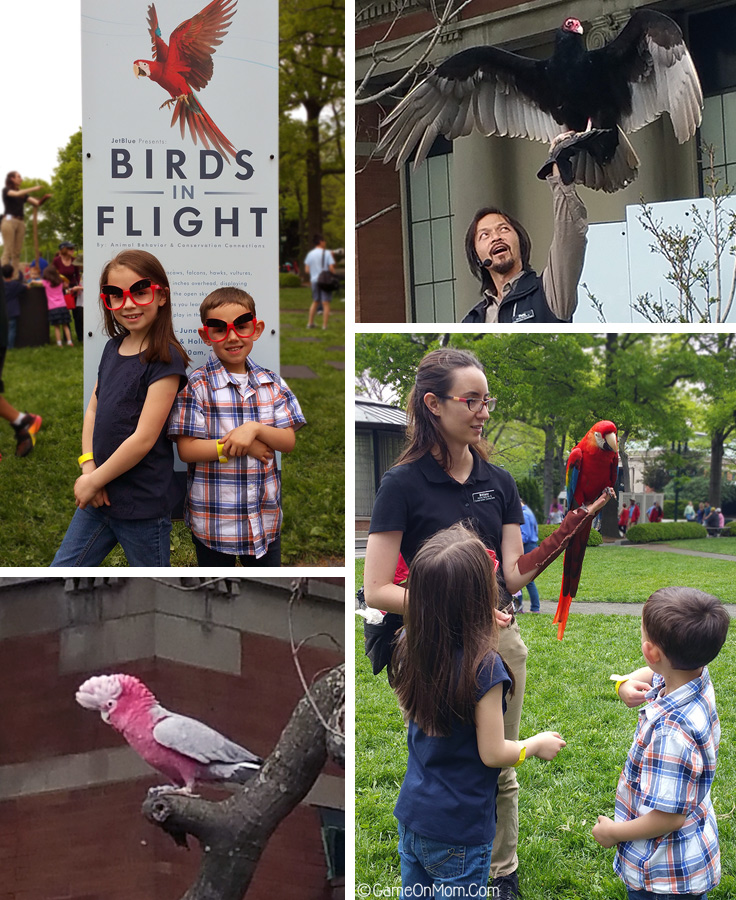 Birds in Flight Show at the Bronx Zoo