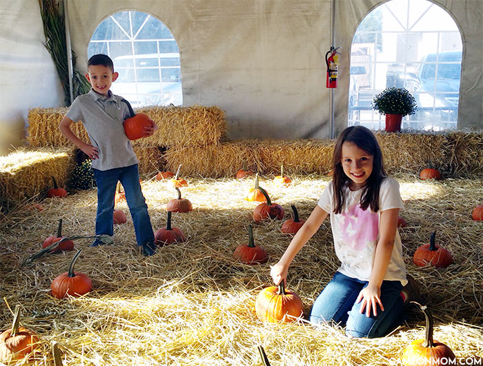 iPlay America - Pumpkin Patch