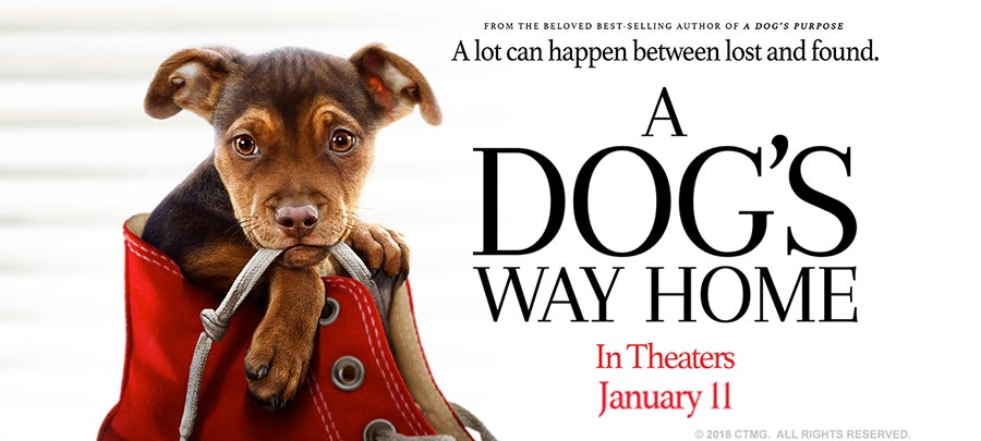 A Dog's Way Home Movie